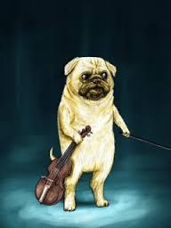 pug violin