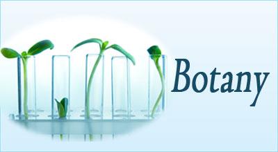 Botany essay team